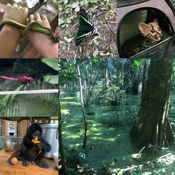 collage of photos from samantha's trip to the Amazon rainforest